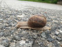 穿过街道的迅速蜗牛 库存照片