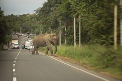 穿过路的狂放的大象 免版税图库摄影