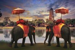 穿戴与泰国王国传统辅助部件standi的大象 库存照片