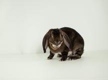 穿戴的兔宝宝 免版税库存照片