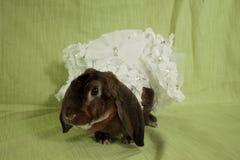穿戴的兔宝宝 免版税库存图片