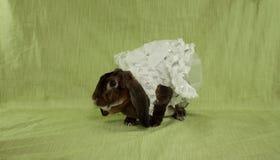 穿戴的兔宝宝 库存照片
