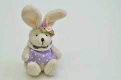 穿戴的复活节兔子 库存图片