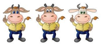5穿戴的母牛- composit 库存图片