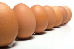 突出的注意鸡蛋 免版税库存图片