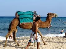 突尼斯 免版税图库摄影