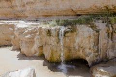 绿洲突尼斯 免版税库存图片