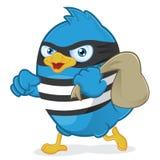窃贼蓝色鸟 免版税库存图片