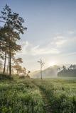 窄路在Suoi近Tia Ho Tuyen Lam湖,大叻市城市,越南 免版税库存图片