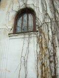 窗口和上升的植物 免版税图库摄影