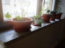 窗口基石的盆的植物 免版税库存图片