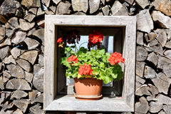 窗口有木背景和花 库存图片