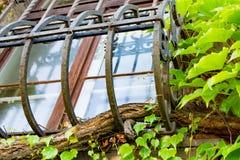 窗口格子长满了与树,美丽的老窗口,在绿色植物外面 免版税库存照片
