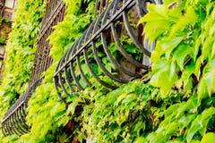 窗口格子长满了与树,美丽的老窗口,在绿色植物外面 库存照片