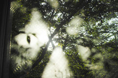 从窗口的树 库存照片