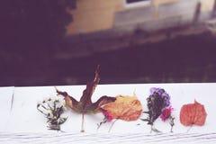 从窗口的秋天 免版税图库摄影