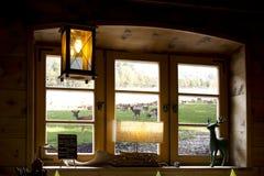 从窗口看见的鹿群 库存照片
