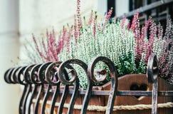 窗口装饰 花盆用淡紫色在窗台开花 库存照片