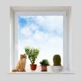 窗台的猫和房子植物 免版税库存照片