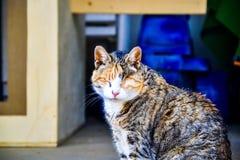 窗帘三颜色涂上了享用太阳逗人喜爱的猫 免版税库存图片
