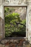 窗架一棵树在密林 免版税库存照片