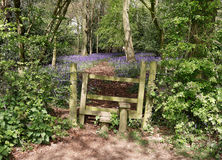 窗框到英国会开蓝色钟形花的草木头里 免版税图库摄影