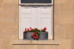 窗槛花箱红色花 库存图片