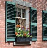 窗槛花箱花的布置 库存照片