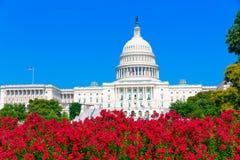 建立华盛顿特区桃红色的国会大厦开花美国 免版税图库摄影