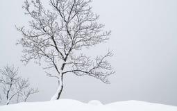 立场单独结构树 免版税库存照片
