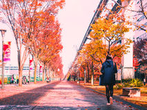 立川市, 2016年12月的日本:走的街道在秋天的公园用软的焦点女孩晒干和 库存照片