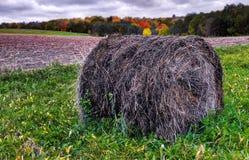 立陶宛农业草甸在秋天 库存照片