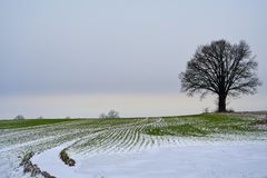 立陶宛冬天风景 在域的结构树 库存图片