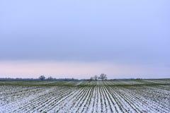 立陶宛冬天风景 在域的结构树 免版税库存照片