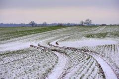 立陶宛冬天风景 在域的结构树 免版税图库摄影