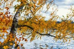 立陶宛,特拉凯2017年 10 19 Galve湖,美好的秋天天,秋天颜色,与绿色和黄色叶子的autimn树 库存图片