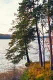 立陶宛,特拉凯2017年 10 19 Galve湖,美好的秋天天,秋天颜色,与绿色和黄色叶子的autimn树 免版税库存图片
