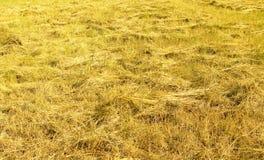 竖起的干草 库存图片