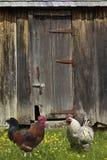 竖起谷仓农场 库存照片
