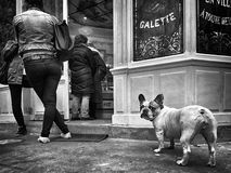 站在队中饥饿的狗 免版税库存图片