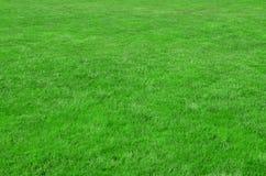 站点的照片有均匀播种的绿草的 新鲜的绿色gras草坪或胡同  图库摄影