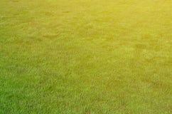 站点的照片有均匀播种的绿草的 新鲜的绿色gras草坪或胡同  免版税库存图片