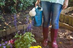 站立与喷壶的资深妇女的低部分在土的植物旁边 免版税库存图片