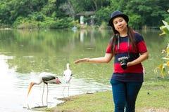 站立两绘鹳的近的池塘的旅游妇女画象  图库摄影