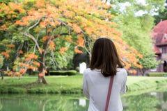 站立亚裔的女孩拍美丽的新鲜的树照片与co的 库存图片