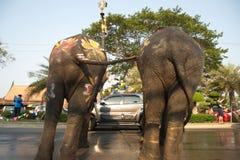 站立双的大象嬉戏地飞溅水在街道的一条街道 免版税库存图片