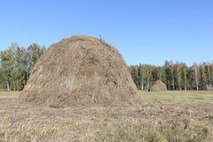 站立在一个倾斜的领域的干草堆 库存照片