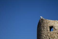 站立在一个古老塔的海鸥 图库摄影