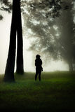 站立在一个有薄雾的森林里 免版税库存照片