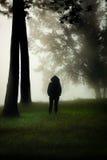 站立在一个有薄雾的森林里 免版税图库摄影